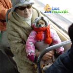 Cold Chihuahua